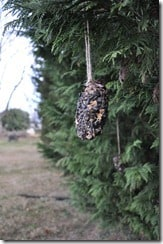 Pinecone bird feeders on tree