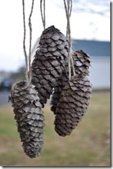 Pinecones Hanging