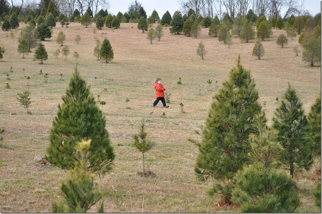 gibbs trees