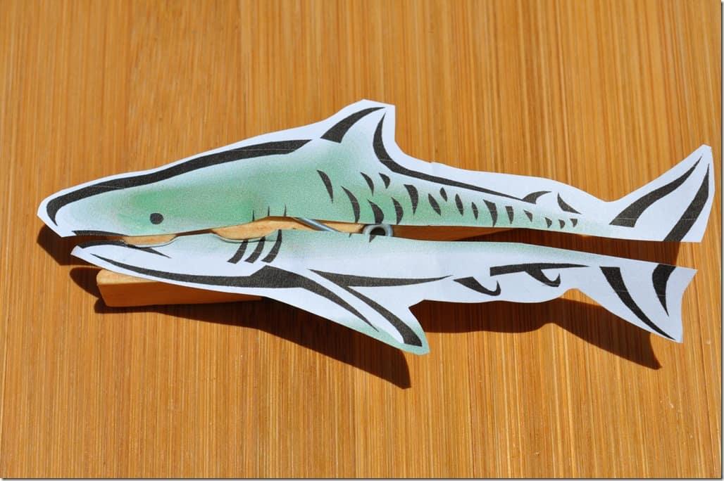 shark 2 closed