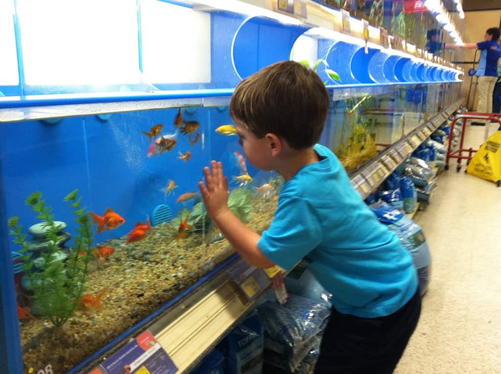 50 easy summer activities for toddlers and little kids for Toddler fish tank