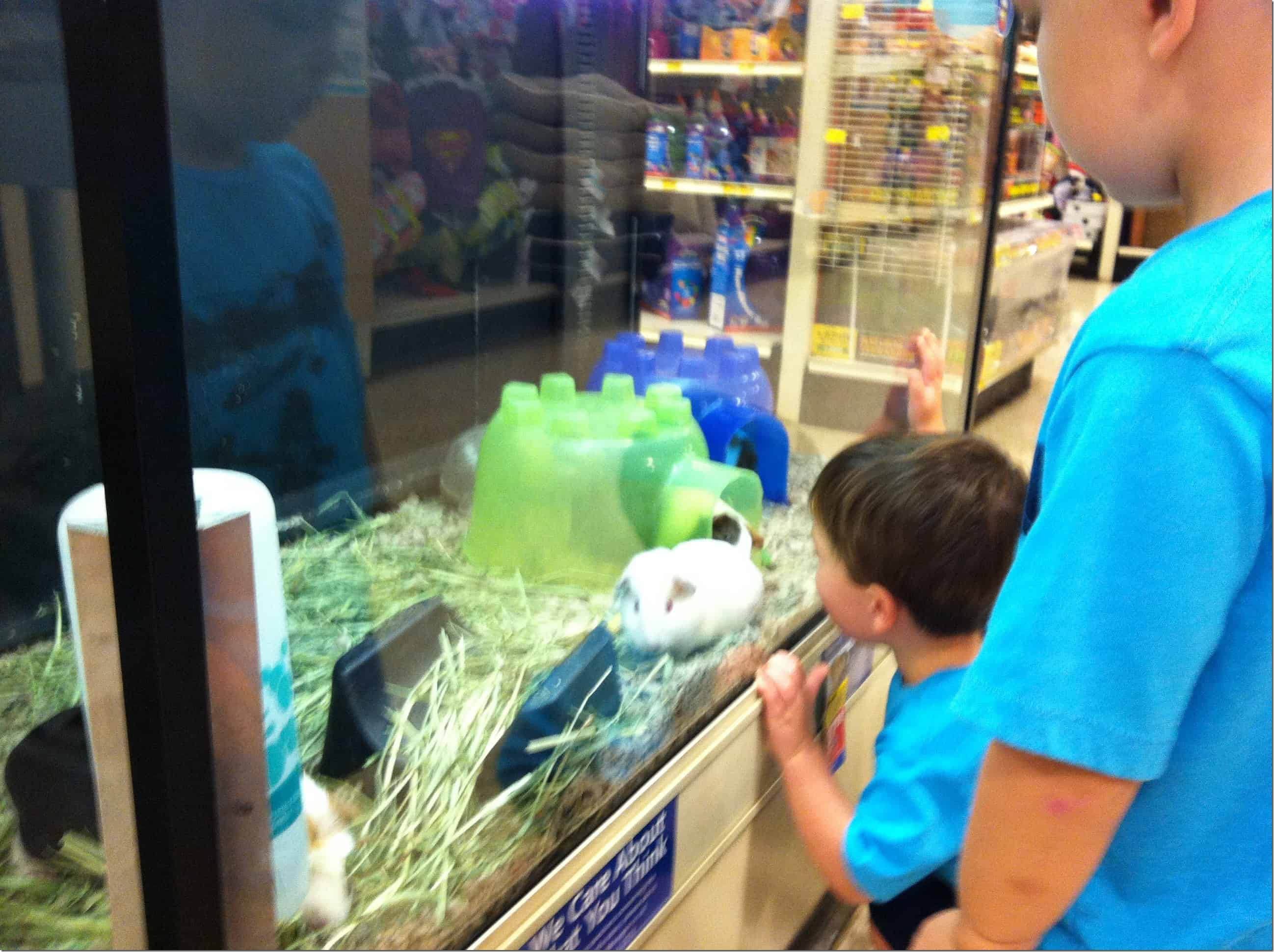 Visiting the pet shop the seasoned mom for Pet stores with fish near me