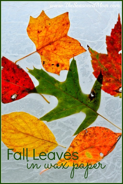autumn leaves essay Free essays on autumn leaves turn red use our research documents to help you learn 151 - 175.
