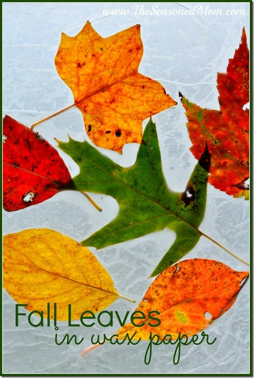 Fall Leaves in Wax Paper