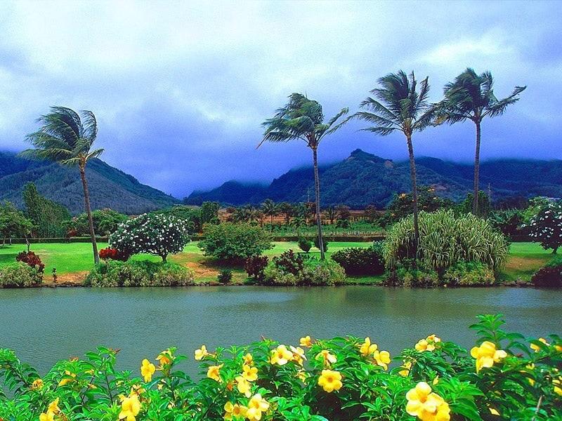 vacation to hawaii essay