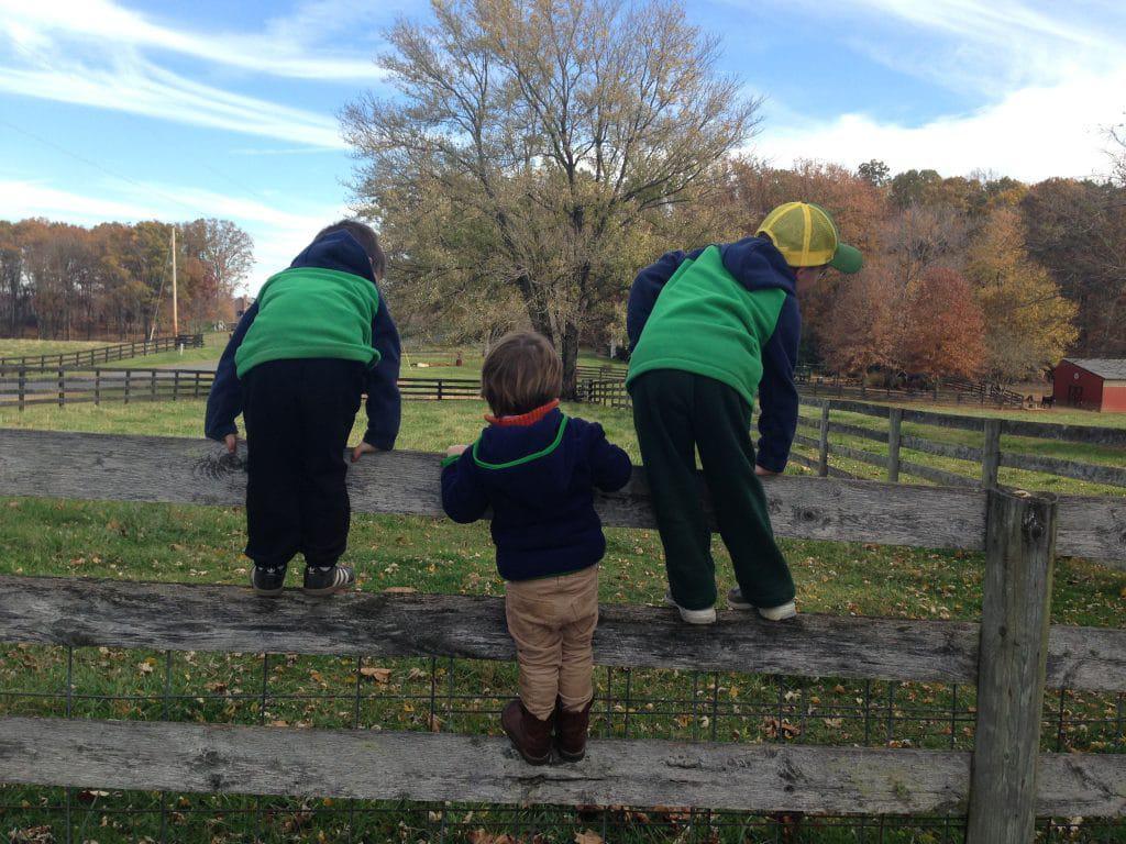 boys on fence