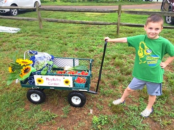 Gibbs pulling farmers market cart with fresh strawberries