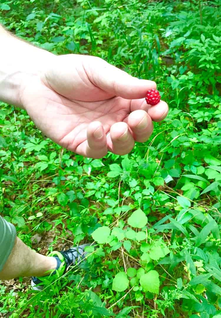 Sahale Snacks Raspberry Picking