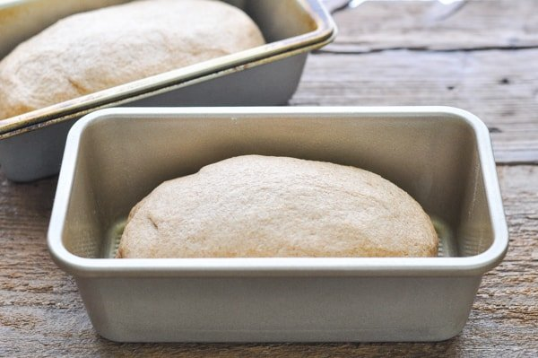 Wheat bread dough in two loaf pans
