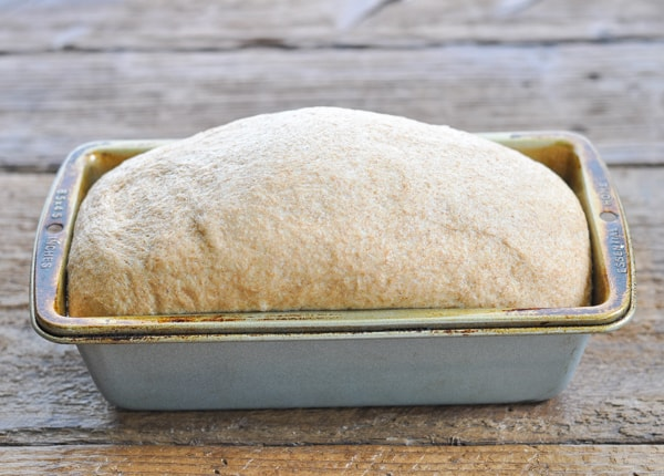 Honey Wheat Bread dough in loaf pan after rising