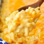 Close up shot of a spoonful of creamy baked mac and cheese
