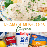 Long collage image of cream of mushroom chicken